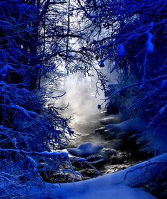 Beautiful Winter Cobalt Scene: