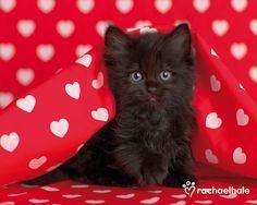 valentine's day cute - Google Search