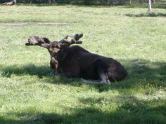 Ähtärin eläinpuistossa