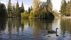 Laurelhurst Park, Southeast Portland