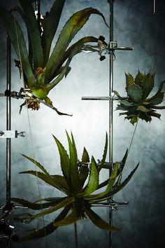 _9999_108102 Air Plants, Indoor Plants, Bühnen Design, Floral Design, Plant Projects, Azuma Makoto, Installation Art, Art Installations, Nature Decor