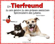 Ich-liebe-Tiere.com