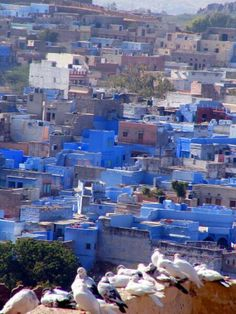 Blue city in Jodhpur, India. would love to see this