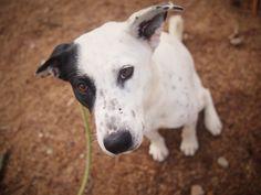 sasha   D A P S Shelter Dogs, Animal Shelter, Animal Protection, Dog Pictures, Animals, Animal Shelters, Animales, Animaux, Animal