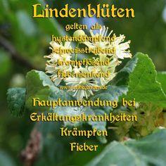 Heilkräuter & Wildkräuter