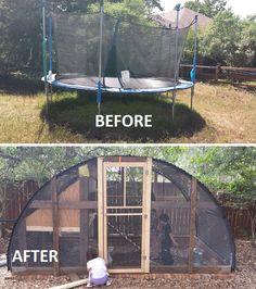 Trampoline Chicken Coop Project