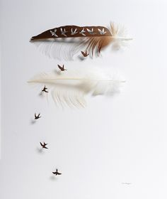Chris Maynard is a master of a scalpel handler. He carefully slices into feathers to create silhouettes of the same birds they are from. Playing with positive and negative spaces yields great results.