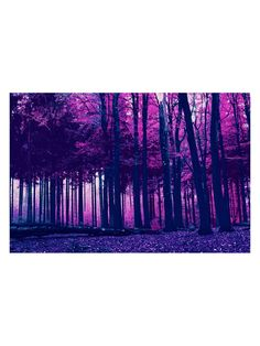 Incandescent Forest (Canvas) from Color Math: Navy + Pink + White on Gilt