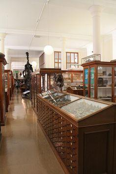 The Sedgwick Museum, Cambridge.