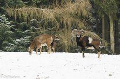 Op stap met de Reptons.......: somewhere in the snow