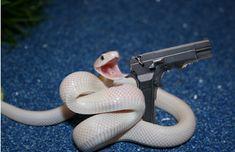 Snek with a gun Cute Animal Memes, Animal Jokes, Cute Funny Animals, Funny Cute, Cute Lizard, Cute Snake, Pretty Snakes, Beautiful Snakes, Cute Reptiles