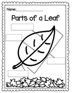 Printables Parts Of A Leaf Worksheet parts of a leaf coloring page learn it pinterest fine motor and texts
