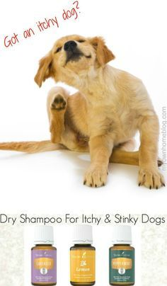 Dry Shampoo For Itchy & Stinky Dogs - My Own Home