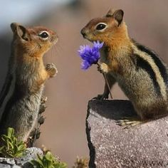 Flowers !! You shouldn't have !!!