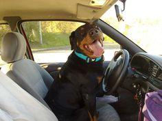 Let's go! #Rottweiler