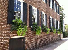 Window boxes in Charleston