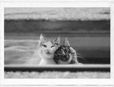 two besties via @EmrgencyKittens