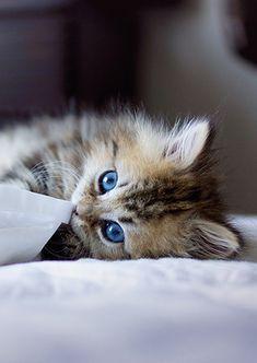 Oh my, look at those eyes!