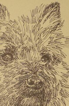 Cairn Terrier dog art portraits, photographs, information and just plain fun. Also see how artist Kline draws his dog art from only words at drawDOGS.com #drawDOGS http://drawdogs.com/product/dog-art/cairn-terrier-dog-portrait-by-stephen-kline/