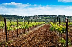 Wine tasting and touring in Israel