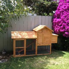 I want chickens and a Chicken coup