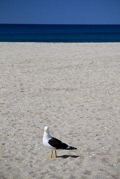 Seagull on Mount Maunganui Beach   © Elyse Childs Photography