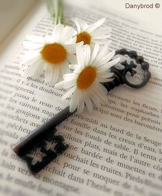 Key ~ Aesthetically Pleasing Flowers Nature, Beautiful Flowers, Daisy Hill, Sunflowers And Daisies, Daisy Flowers, Fresh Flowers, Daisy Love, Daisy Daisy, Old Keys
