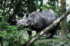 3D-printed rhino horns to curb poaching