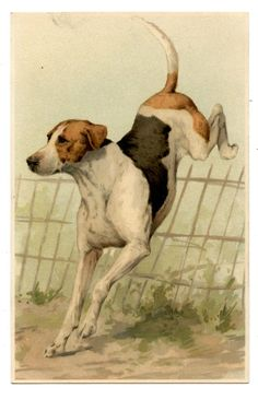 CHIEN DOG | Collections, Cartes postales, Thèmes | eBay!