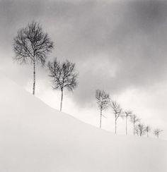 Michael Kenna – Nine Silver Birches Shibetsu, Hokkaido, Japan 2009