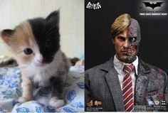 Two-Face Kitty.
