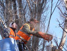 Tree Service Professionals
