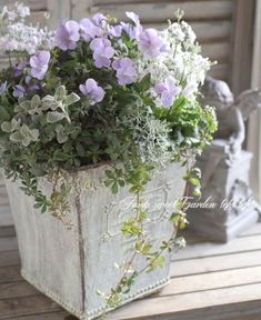 Pastel purple and silver planting, pot Container Plants, Container Gardening, Green Flowers, Beautiful Flowers, Pot Plante, Shabby Flowers, Flower Planters, Flower Boxes, Gardens