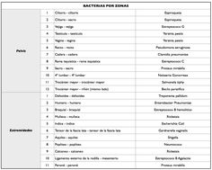 centrobioenergetica - Par Biomagnético - Pares regulares bacterias (pelvis y extremidades)