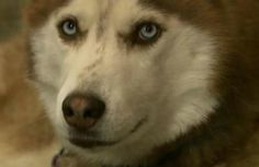 Dog Saves Best Friend's Life After Ski Accident - Pet360 Pet Parenting Simplified