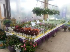Proven Winners at Calloway's Nursery in Southlake Proven Winners, This Is Us, Nursery, Garden, Flowers, Plants, Garten, Baby Room, Lawn And Garden