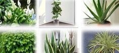 Αυτά τα φυτά είναι βόμβες οξυγόνου -Πάρτε τουλάχιστον ένα σπίτι σας -idiva.gr