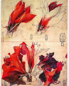 Horst Janssen, Artist Sketchbook, Botanical Art, Illustration Art, Illustrations, Flower Art, Painting & Drawing, Graphic Art, Art Drawings