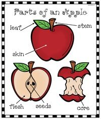Apple Activities: Parts of an Apple Emergent Reader Packet Preschool Science, Preschool Lessons, Preschool Apples, Apple Activities, Autumn Activities, September Preschool Themes, Apple Chart, Apple Classroom, Apple Unit