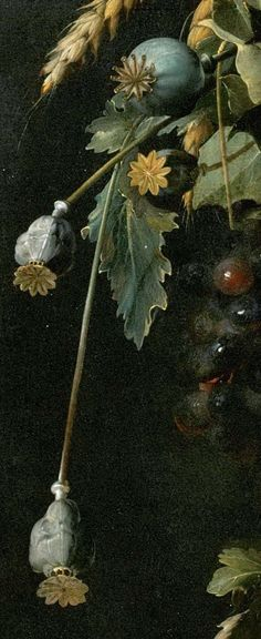 Poppy Seed Heads ~ Detail from a Painting by Jan Davidszoon de. Heem) (1606-1684), Dutch Still Life Painter ....
