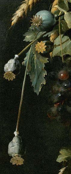 Poppy Seed Heads ~ Detail from a Painting by Jan Davidszoon de. Heem) (1606-1684), Dutch Still Life Painter ....