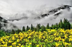 Kackar Mountain, Rize, Turkey