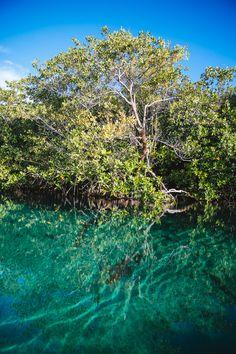 Casa Cenote, Tulum -8