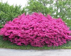 Crave a bit of dimension, perspective, height and extra color in your groundcovers? DIY Network suggests you consider wide-spreading shrubs.