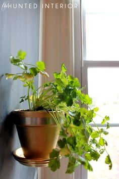 Indoor Herb Garden. I love that its attached to the wall and looks as if it's floating!