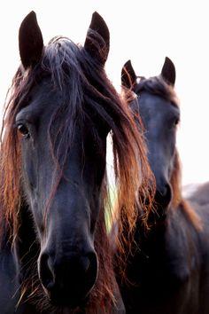 Beautiful Horse Photos by Serni-AmO Images-AmO Images
