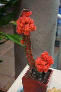 Small Succulent Plants, Cacti And Succulents, Planting Succulents, Cactus Plants, Garden Plants, House Plants, Planting Flowers, Unusual Plants, Cool Plants