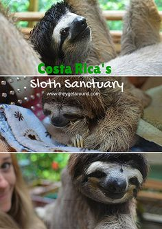 meet the sloths at the Sloth Sanctuary in Costa Rica