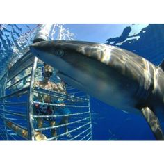 Hawaii Shark Encounters (Oahu).  I really, really want to do this! Not sure if I have the guts