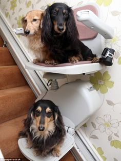 Off to bed: Pippa, bottom, Heidi, top left, and Millie, top right, glide smoothly to bed in their stairlift